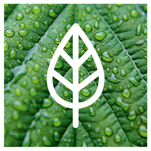 leaf icon over green leaf photo